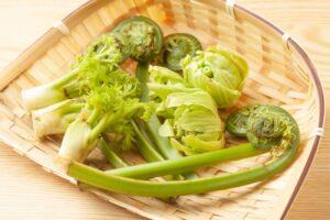 天然の山菜(イメージ)